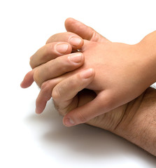 Hand of the girl in a hand of the father. Isolation on a white