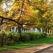 Autumn season. Alley in city park. Kostroma