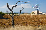 valley of windmills, Mallorca, red field in foreground poster
