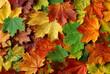 Quadro Herbstblätter