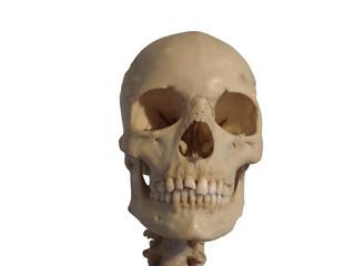 Vrai crâne