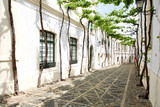 Fototapety vine in the narrow white street of Spanish Andalusia