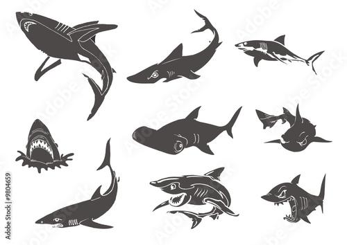différents types de requins