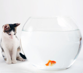 Curious kitten looking at goldfish in fishbowl
