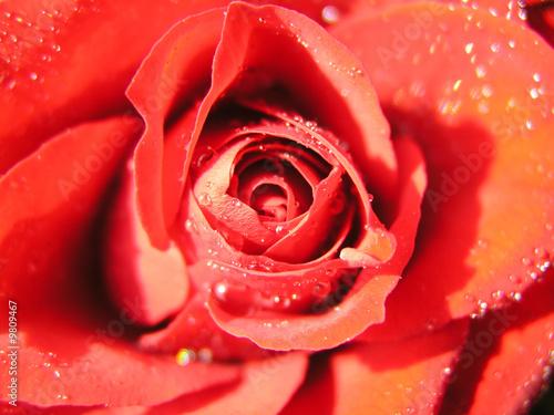 Fototapeta Blüte