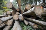Stack of woodpiles in forest, front view poster