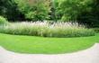 Pelouse et plantes, jardin public, Allemagne.
