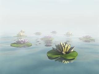 Water lilies in a dreamlike foggy lake.