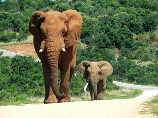 elephants on the way