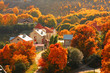 Houses among the autumnal trees. Sun weather.