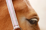 eye of a palomino