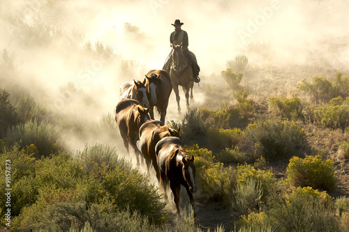 Single cowboy guiding a line of horses through the desert