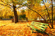 Empty green bench in the autumnal park.