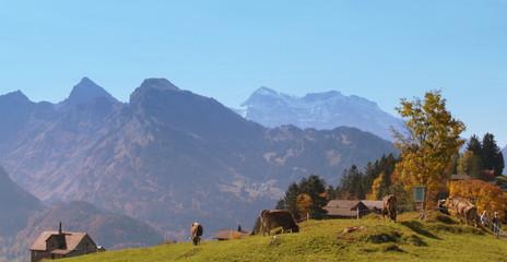 alpage...automne
