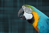 Parrot On Plaid poster