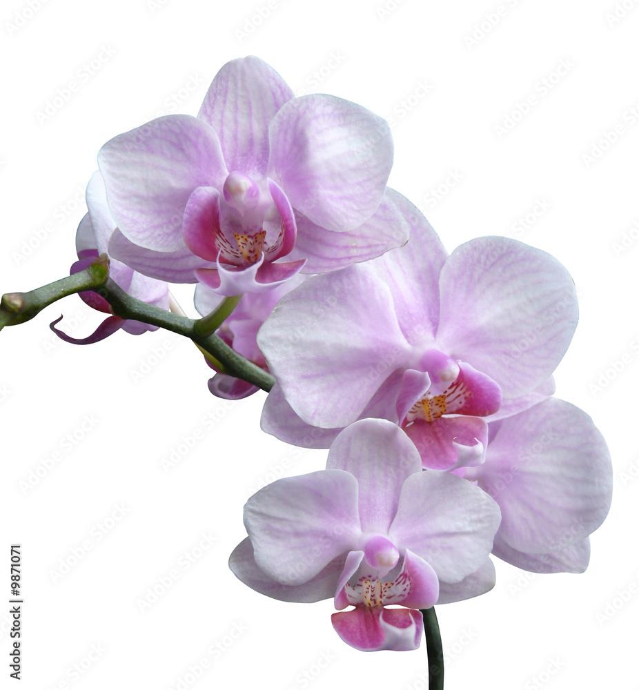 Strona 166 Fototapety Hcast 138363 Fototapety Na Wymiar  # Meble Narcisse