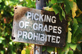 Signage at a vineyard that says no picking of grapes poster