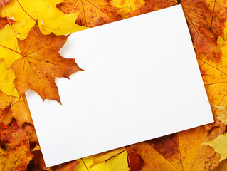 Blank paper on autumn leaves.