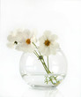 White flowers in a glass round glass