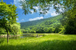 summer landscape with river and blue sky