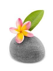 fleur et feuille frangipanier esprit ZEN