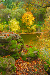 autumn varicoloured  forest and river