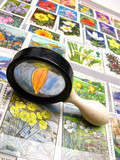 old magnifying magnifier and collection of stamps, close up poster