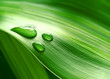 Close-up of green plant leaf - 9939656