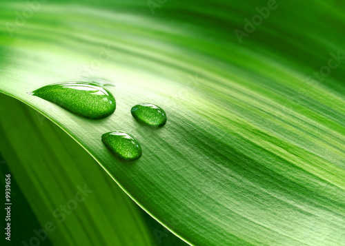 canvas print picture Close-up of green plant leaf