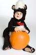 Skunk With Pumpkin