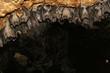 philippine bats