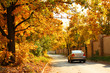 Car will go along the road. Autumnal trees.