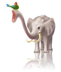 the elephant and bird