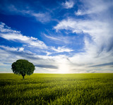Fototapety Lonely tree at sunrise