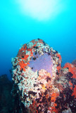 Colorful underwater rock formation in the Indian Ocean poster