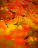 autumn background with some oak leaves and glitters in it poster