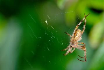 Araignée de dessous 1