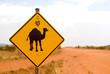 Strassenschild Vorsicht Kamel