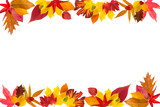 Colorful border composed of multiple autumn leaves poster
