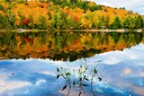Fall colors in Canada's Algonquin Park reflected on a lake