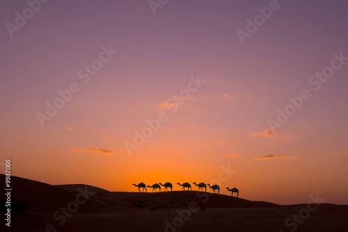 Kamelkarawane bei Sonnenuntergang in der Wüste
