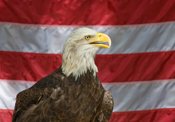 American eagle with the united states flag