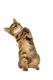 Tabby kitten striking her paw in the air poster