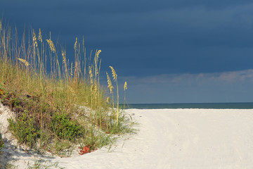 Seaoats framing Gulf of Mexico. Madeira Beach Florida