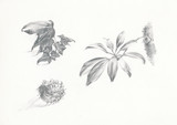 flower, leaves and bur - hand drawing poster