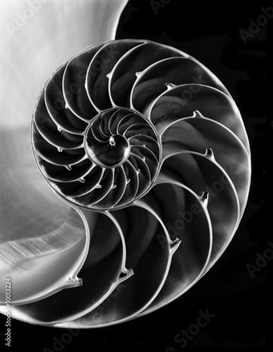 Nautilus shell interior - 10013224