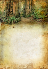 Redwood forest above a grunge background with copy-space