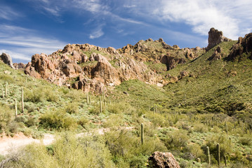 scenic view of the Sonoran desert wilderness in Arizona