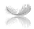 Leinwanddruck Bild - white feather reflection