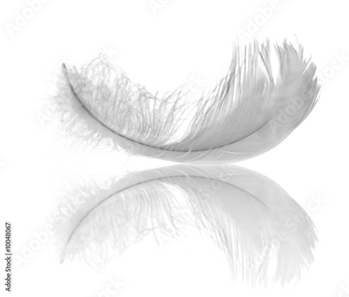 Tuinposter Zwaan white feather reflection